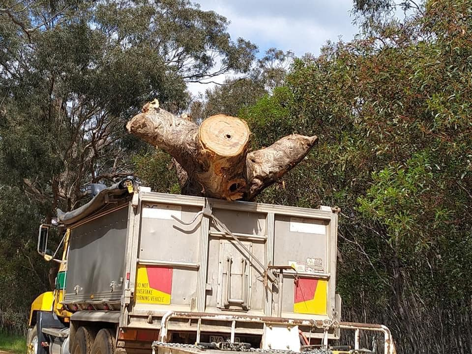 Victorian Government Cuts Down Sacred Trees For Highway Expansion