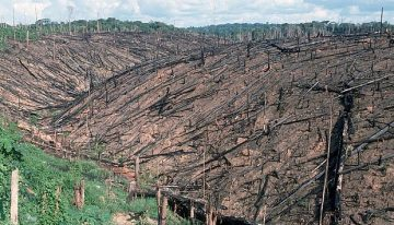 Devastation of the Amazon increasing