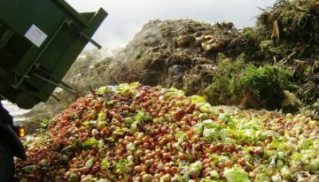 Food production, climate change and capitalism