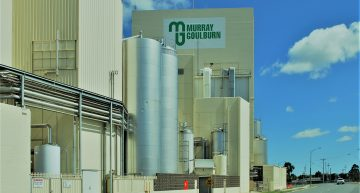 Murray Goulburn workers latest victims in dairy industry