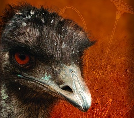 Book Review: Dark Emu