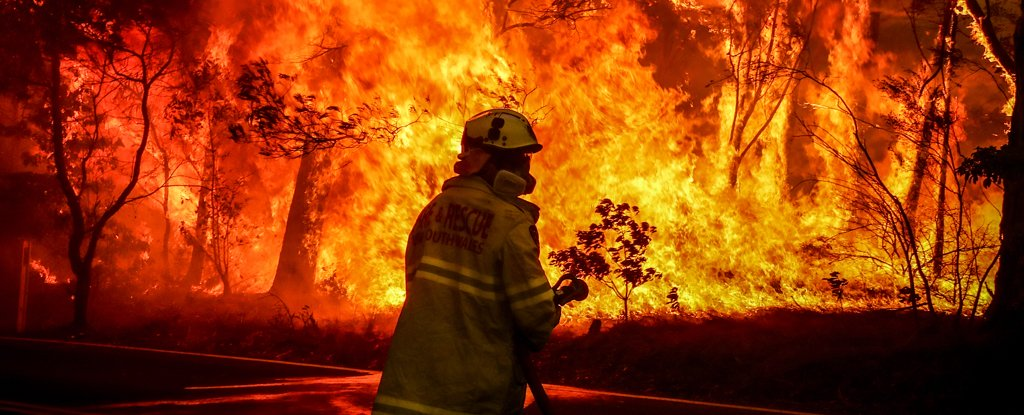 Black Summer bushfires: more impacts revealed