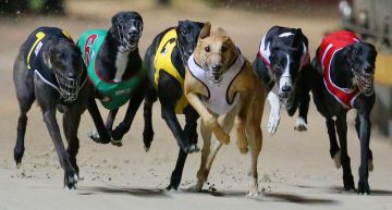 Greyhound racing banned in NSW
