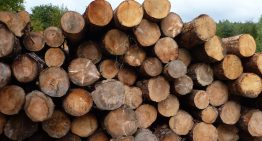 Timber industry in chaos